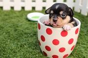 Stérilisation du chien : à quoi ça sert ?