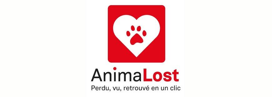 Découvrez Animalost, l'appli pour retrouver facilement votre animal !