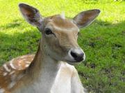 Que faire si vous percutez un animal ?