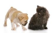 Assurance chien chat