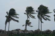 vent-arbres