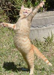 En fonction de la race de votre chat, la cotisation d'assurance peut varier