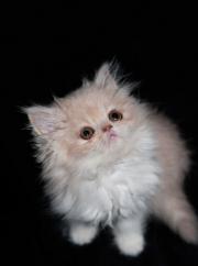 Accueillir un bébé chat à la maison