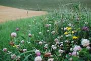 Protection de la biodiversité : la GMF s'engage