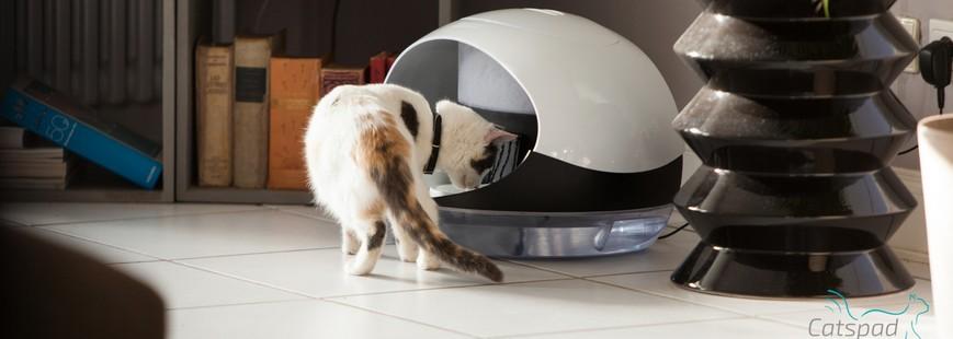 Prenez soin de votre chat à distance avec Catspad