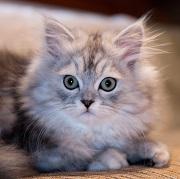 Avec Assurland, trouvez l'assurance qu'il faut à votre chat !