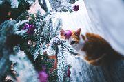 Votre chat a-t-il eu son cadeau sous le sapin ?