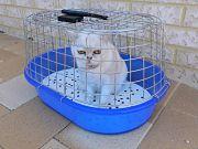 Quels prix pour la stérilisation d?un chat ?