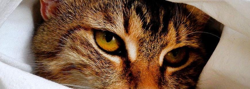 Des chats inondent un refuge pour animaux