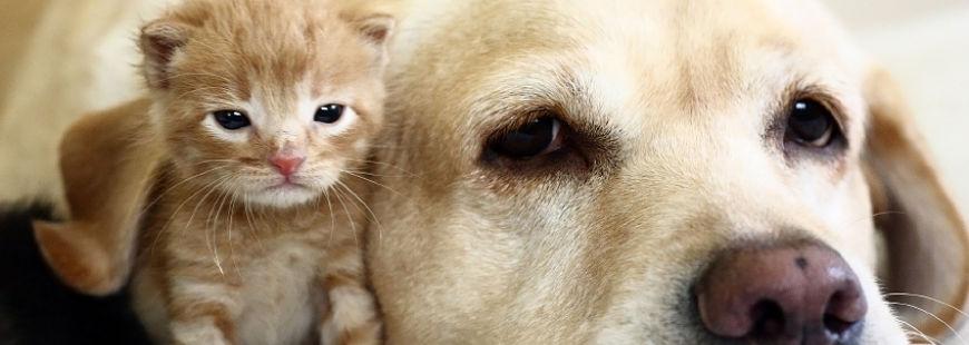 Comment bien appréhender la rentrée de nos animaux ?