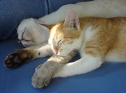 Eté comme hiver, prenez soin de votre chat !