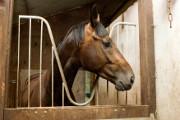 la garantie indispensable quand on fait de l?équitation est sans doute la Responsabilité Civile