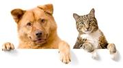Et si vous souscriviez une assurance pour votre animal de compagnie ?