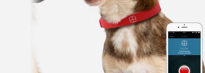 Le collier connecté pour chien Kyon fait presque tout