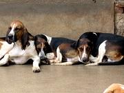 Vérifiez si les croquettes de votre chien ne sont pas concernées par ce problème