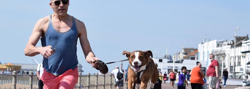 Accessoire pour chien : le tapis roulant et vélo d'appartement