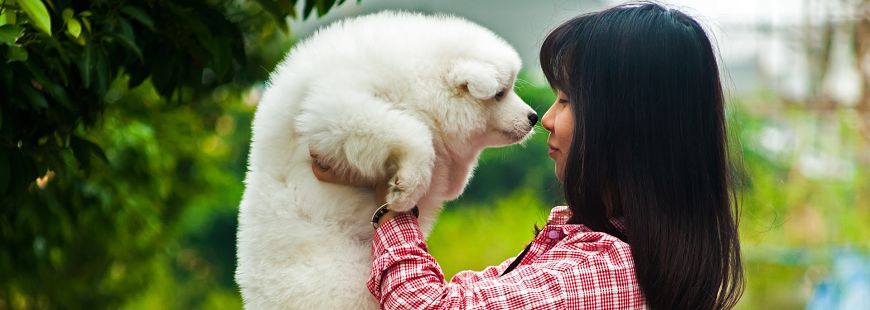 Un formation bientôt obligatoire pour avoir un chien ?