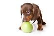 Votre chien aussi doit avoir une alimentation saine et équilibré