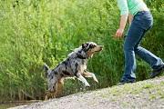 Faites confiance à un dog-sitter !