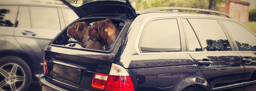 Finie la voiture, bonjour le RER pour nos amis les gros chiens !