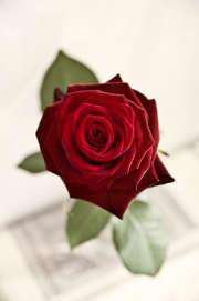 Faites garder vos enfants pour la Saint Valentin