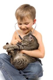 Surveillez la santé de votre chat !
