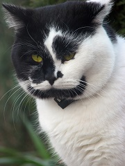 Trouver une bonne assurance chat