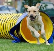 Pensez à l'assurance pour le sport canin