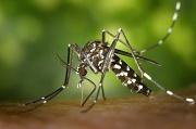 Virus Zika : où en est-on ?