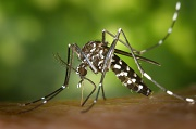 Virus Zika : o� en est-on ?