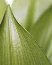 feuille-verte