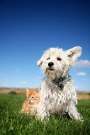 N'attendez plus pour assurer votre animal de compagnie !