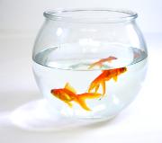 Assurance habitation et aquarium