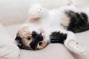Santé animale : votre chat tourne sur lui-même