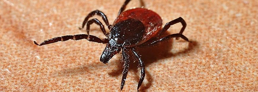 Le ministère de la santé s?attaque à la maladie de Lyme