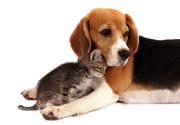 Votre animal de compagnie a-t-il changé de comportement ?