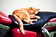 Voyager avec votre animal domestique à moto